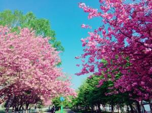 H29.4.14齊藤ブログ写真②