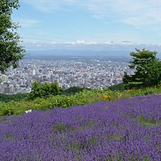 lavender_city